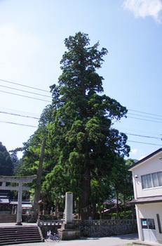 MINASIJINJA-02.jpg